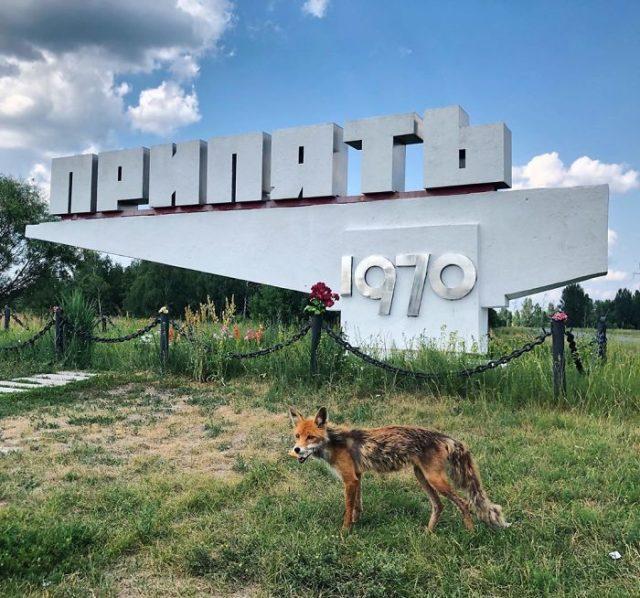 Фото Чернобыля сейчас - спустя больше 30 лет 1