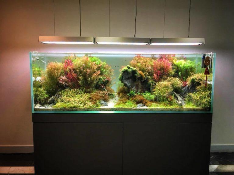 статьи запуск аквариума пошаговая инструкция с фото отгорожено волнорезами