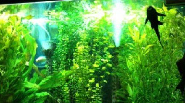 Запуск аквариума с нуля: пошаговая инструкция 1