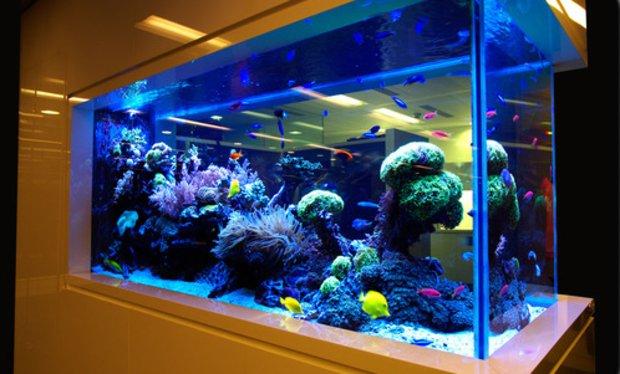 Запуск аквариума с нуля: пошаговая инструкция 3