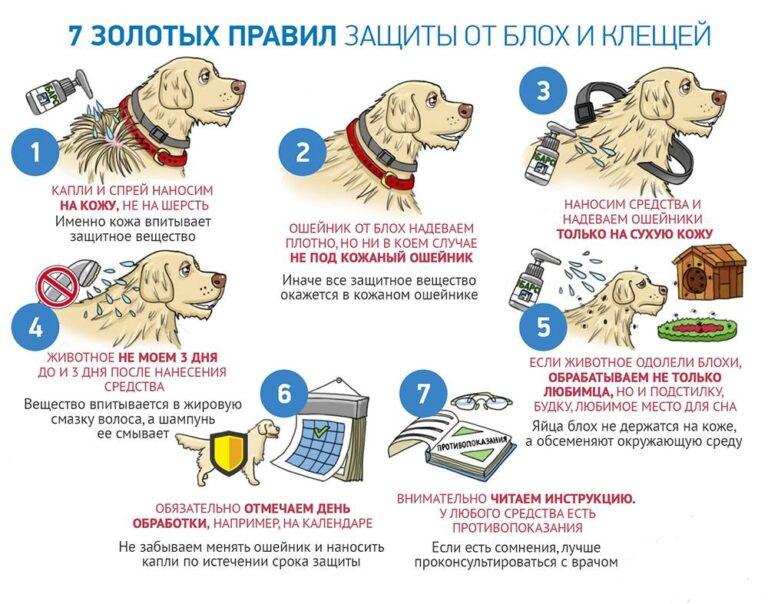 Боремся с клещами на собаках
