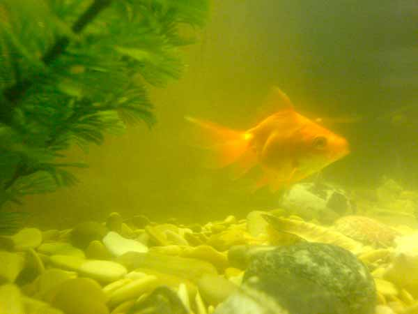 вода мутная в аквариуме