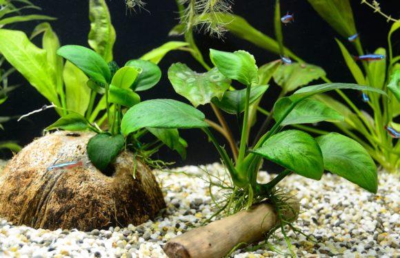 Какой выбрать грунт для аквариума с живыми растениями
