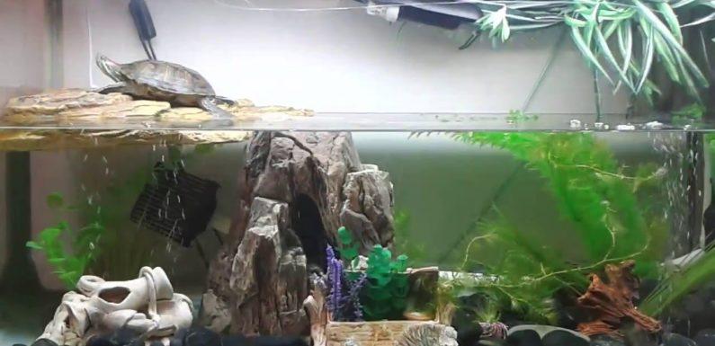 Содержание черепах в домашнем аквариуме