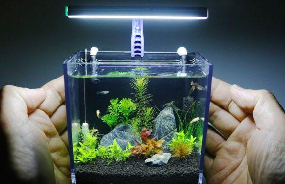 Какие рыбки могут жить в маленьком аквариуме