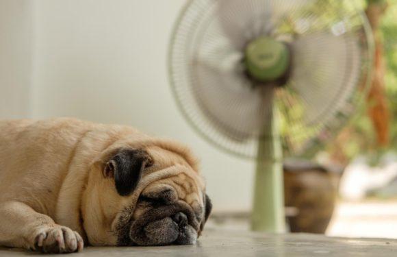 Выбираем охлаждающий коврик для собак