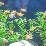 прозрачная вода в аквариуме