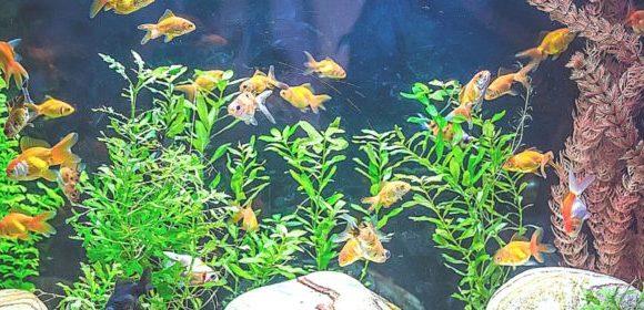 Почему в аквариуме мутнеет вода и как с этим бороться