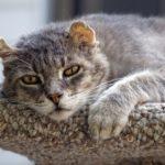 Частое мочеиспускание у кошки: норма и патология 15
