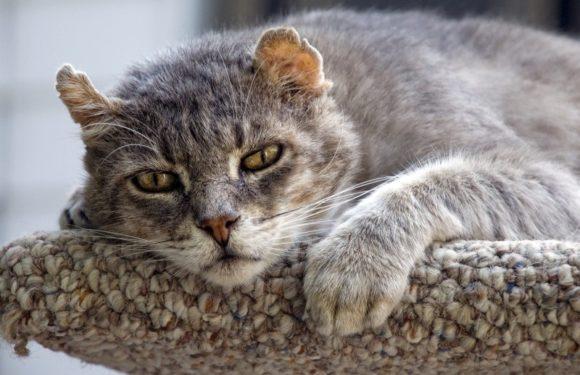 Частое мочеиспускание у кошки: норма и патология