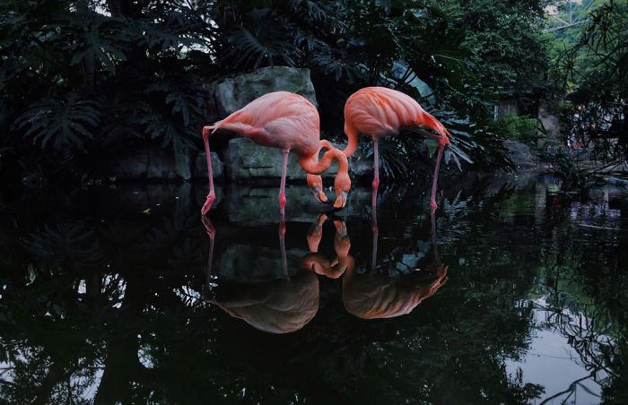 Лучшие  фотографии года, сделанные на iPhone (iPhone Photography Awards 2020) 2