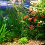 Какие растения для аквариума лучше: живые или искусственные? 2