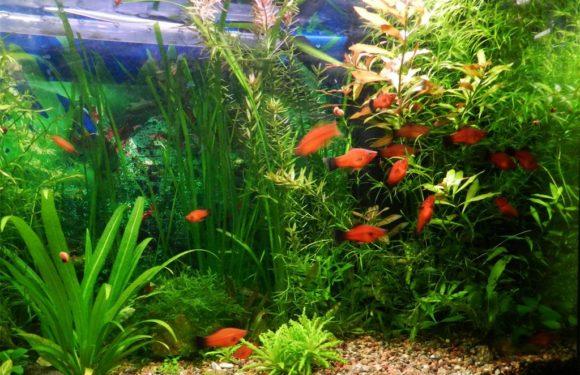 Какие растения для аквариума лучше: живые или искусственные?
