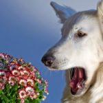 Аллергия у собак: виды, симптомы и причины 13