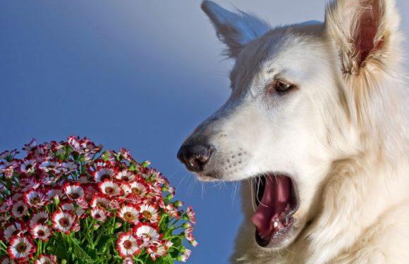 Аллергия у собак: виды, симптомы и причины