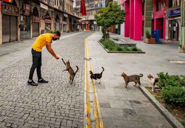 Comedy Pet Photo Awards 2020 - самые смешные фото от участников конкурса 9