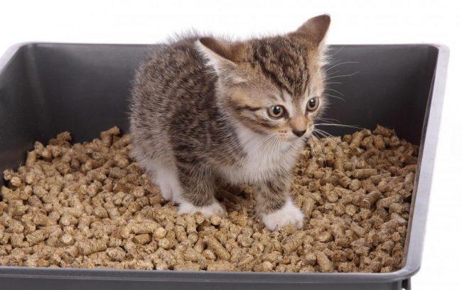 Как приучить котенка к лотку с наполнителем быстро и эффективно 2
