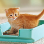 Как приучить котенка к лотку с наполнителем быстро и эффективно 24