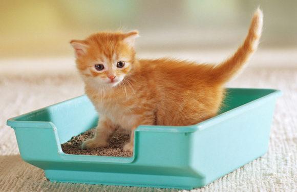 Как приучить котенка к лотку с наполнителем быстро и эффективно