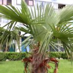 22 секрета выращивания пальм в домашних условиях 2