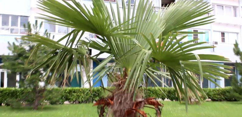 22 секрета выращивания пальм в домашних условиях