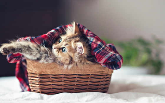 Как приучить котенка к лотку с наполнителем быстро и эффективно 3