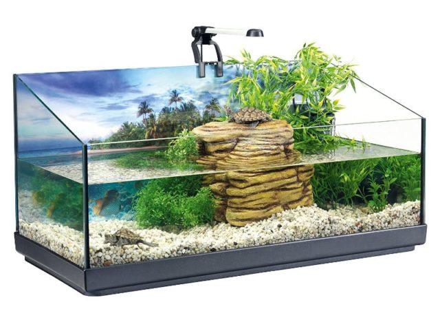 Содержание красноухих черепах в домашних условиях 2