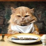 Как правильно хранить сухой корм для кошек? 6