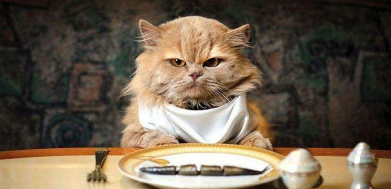 Как правильно хранить сухой корм для кошек?