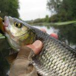 Осенняя рыбалка на голавля: что нужно знать 3