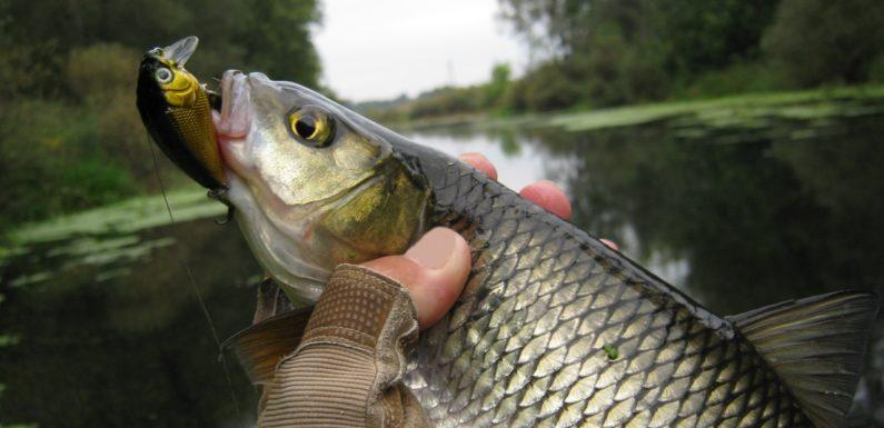 Осенняя рыбалка на голавля: что нужно знать
