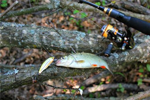 Осенняя рыбалка на голавля: что нужно знать 2