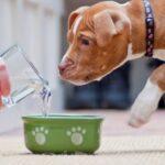 Почему собака не хочет есть и не пьёт воду? 17