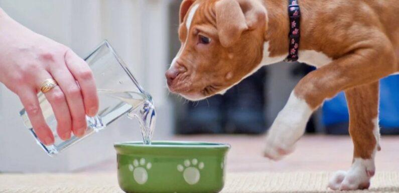 Почему собака не хочет есть и не пьёт воду?