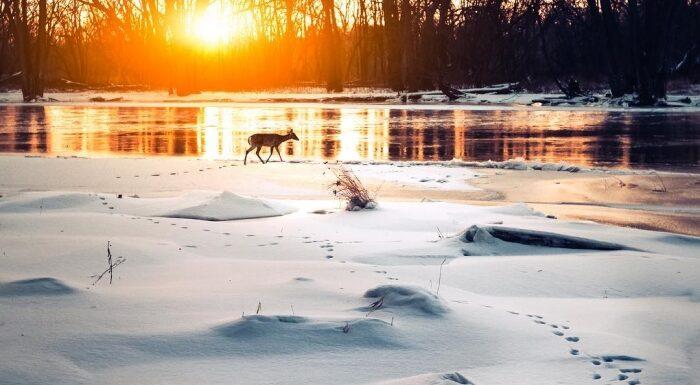 Удивительные снимки Логана Брауна (Logan Brown): природа во всей красе