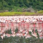 """Озеро Богория - """"Розовая сказка"""" в Кении 11"""