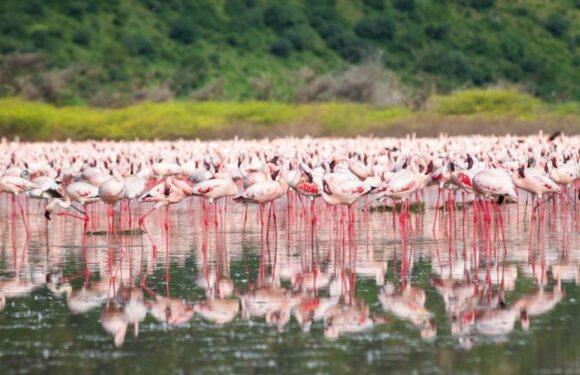 """Озеро Богория – """"Розовая сказка"""" в Кении"""