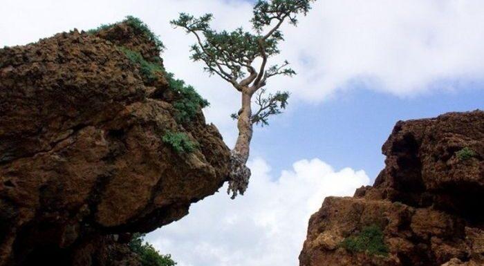 Фото природы, которая способна удивлять!